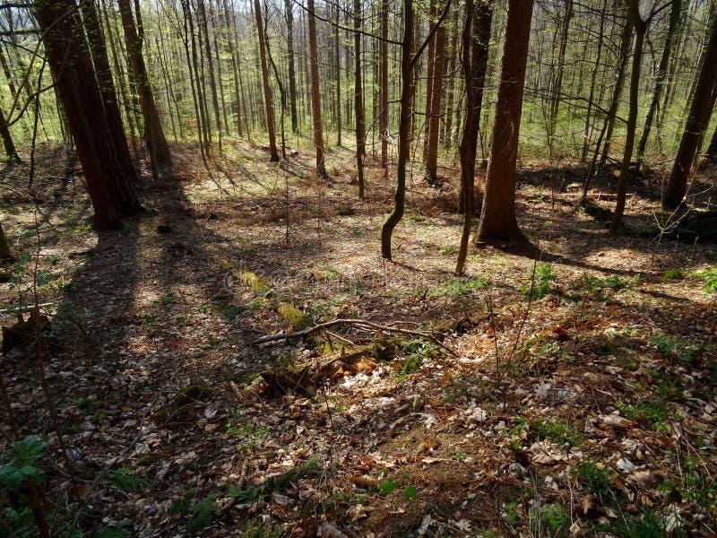 Viehleite Hill Pirna Free Public Domain Cc0 Image