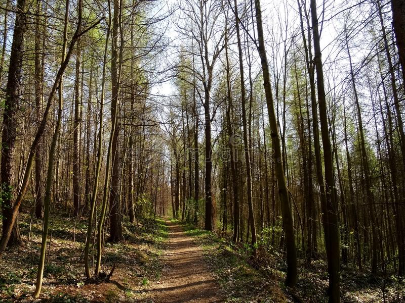 Viehleite Hill Pirna royalty free stock photos