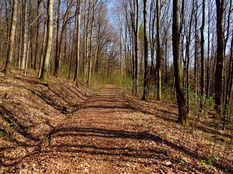 Viehleite Hill Pirna stock photos