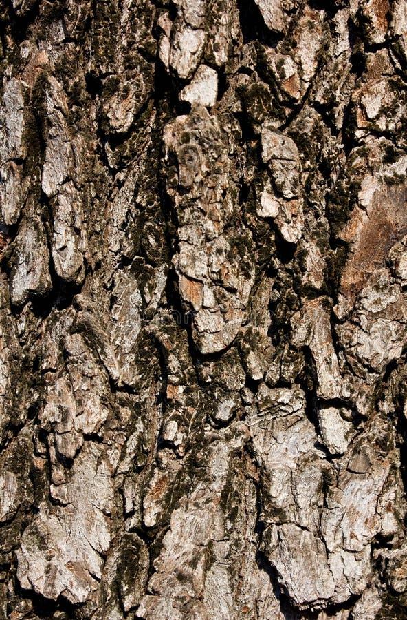 Vieil épluchage rustique en bois de peinture de fond image libre de droits
