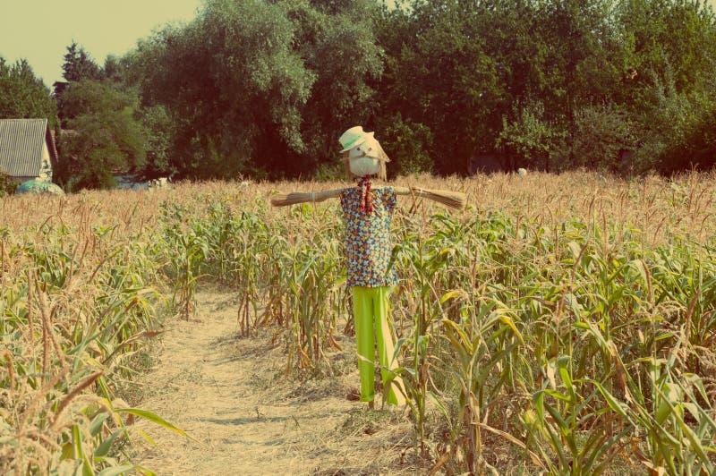 Vieil épouvantail dans un champ de maïs photo stock