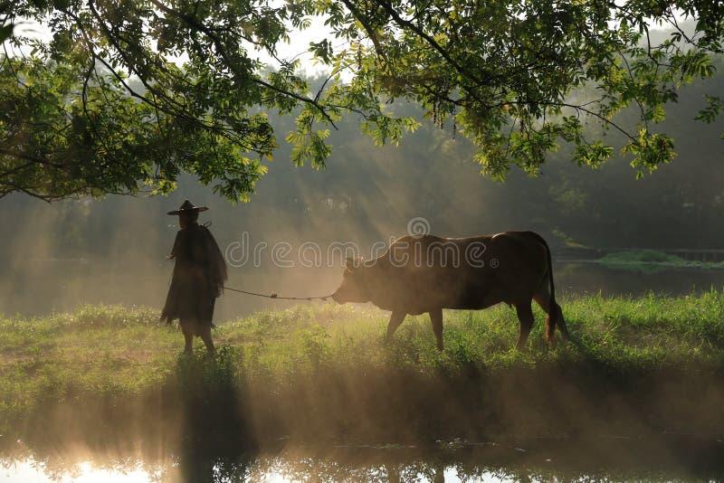 Vieil agriculteur sous le banian antique images libres de droits