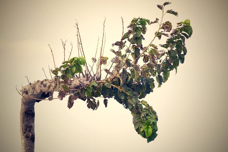 Vieil arbre à feuilles caduques dans la perspective de ciel photo libre de droits