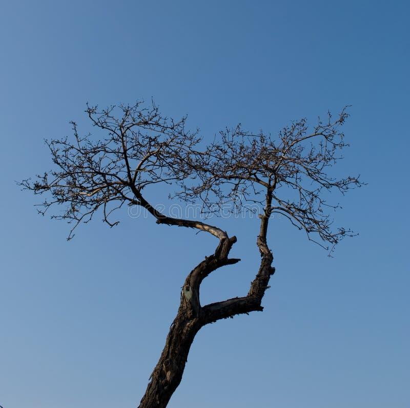 Vieil arbre. photo stock