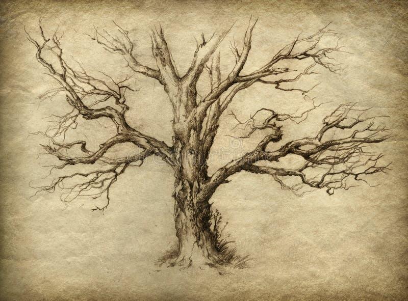 Vieil arbre illustration de vecteur