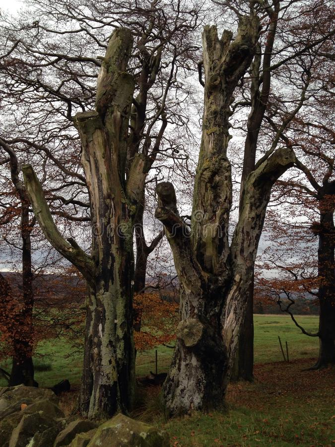 Vieil arbre photos stock