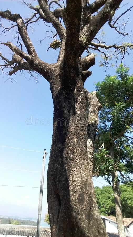 Vieil arbre image libre de droits