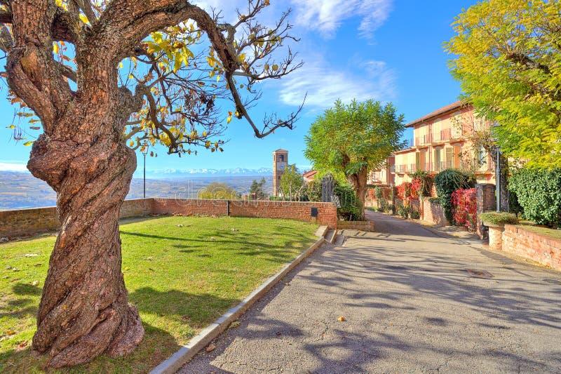 Vieil arbre avec des gows de feuilles dans la petite ville italienne. photo stock