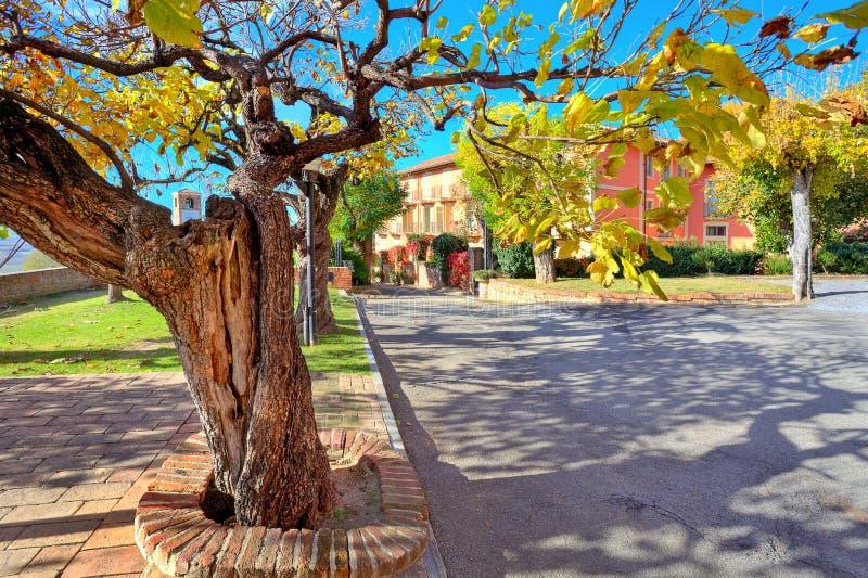 Vieil arbre avec des gows de feuilles en petite ville. photos libres de droits
