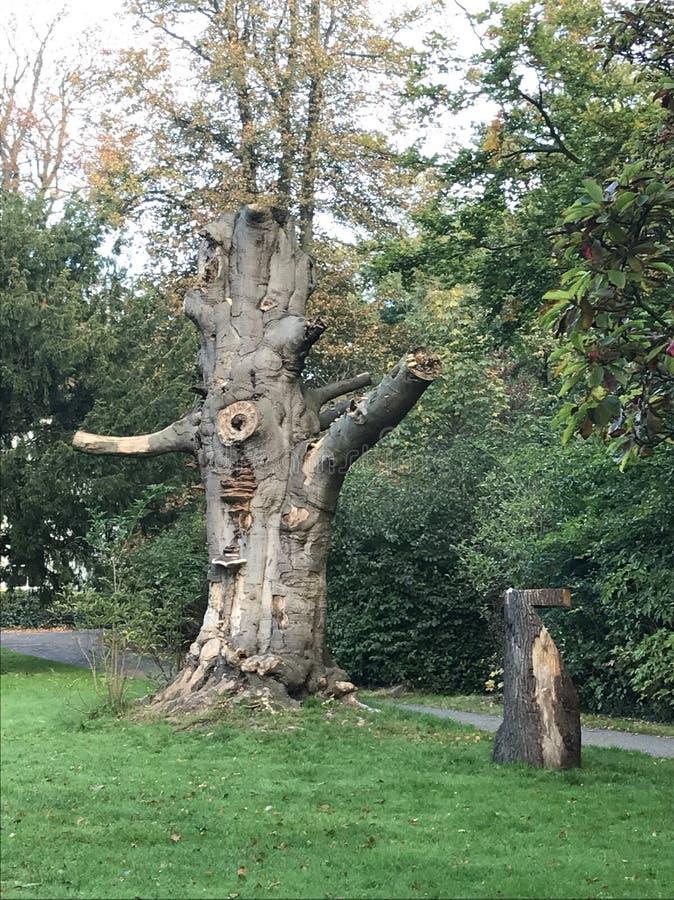 Vieil arbre avec la magnolia images stock