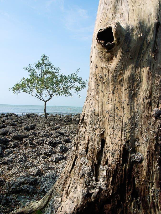 Vieil arbre avec le trou photos libres de droits