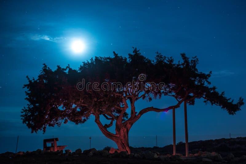 Vieil arbre de la Chypre sur un fond du ciel nocturne Lune éclairée à contre-jour lumineuse images libres de droits