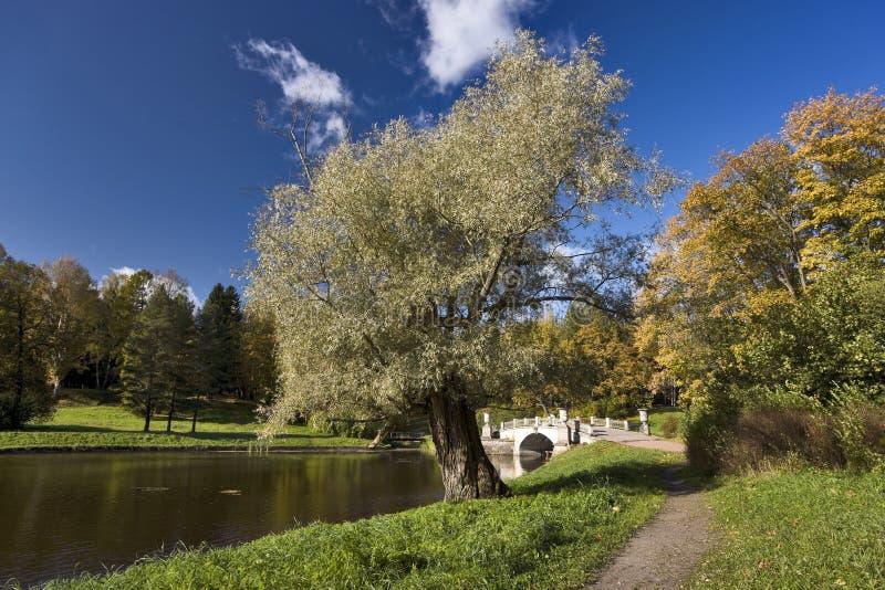 Vieil arbre et passerelle classique photos stock