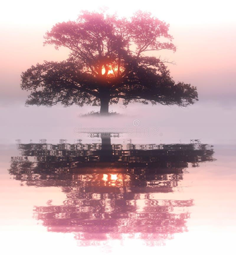 Vieil arbre isolé photographie stock libre de droits