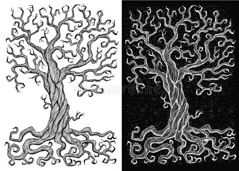 Vieil arbre sans feuilles sur les milieux blancs et noirs illustration stock
