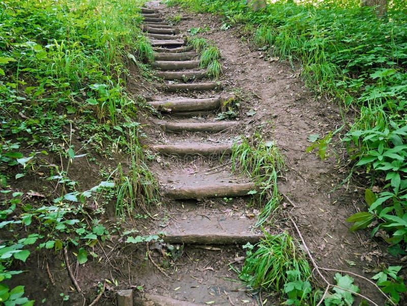 Vieil escalier étroit en bois en parc photographie stock
