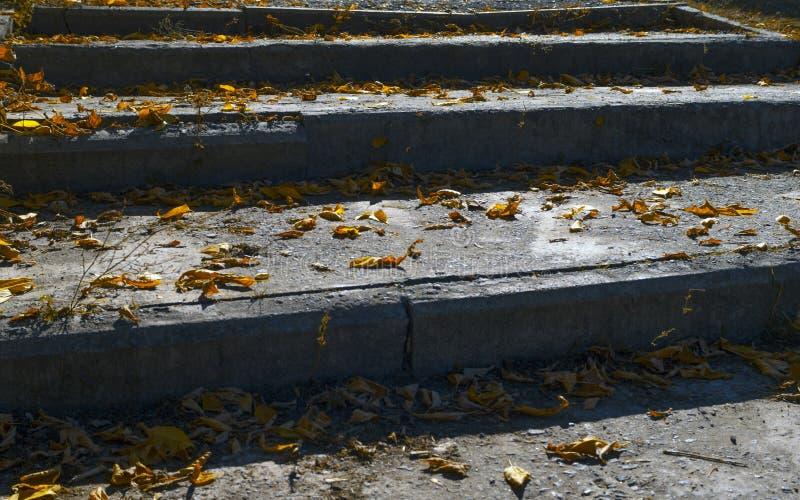 Vieil escalier concret sale, étapes couvertes de feuilles jaunes images stock