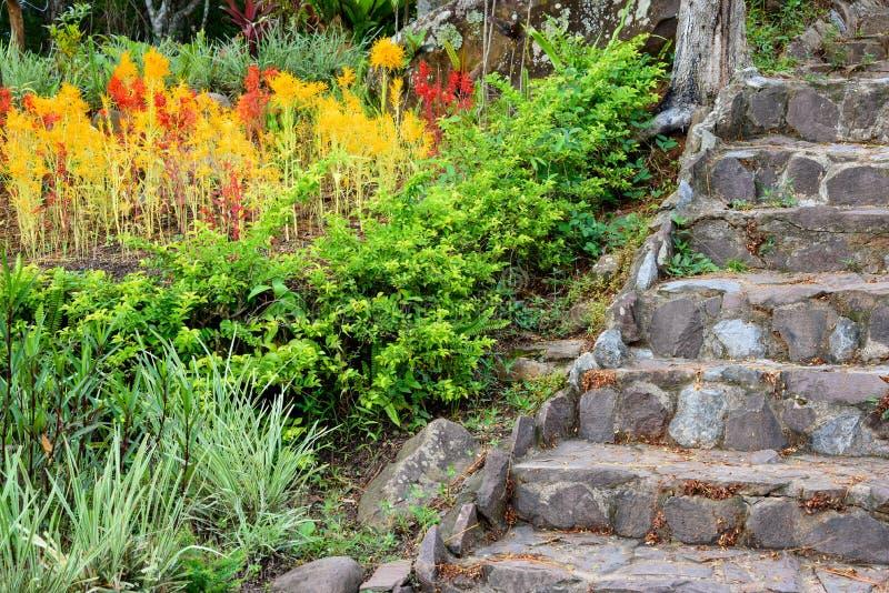 vieil escalier en pierre dans le jardin color photo stock image du for t vert 58240522. Black Bedroom Furniture Sets. Home Design Ideas