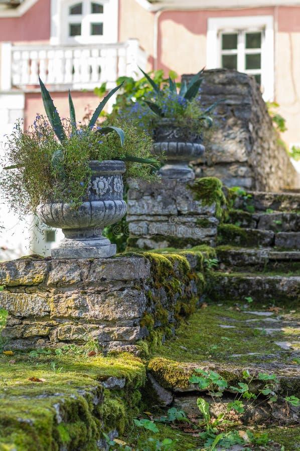 Vieil escalier moussu avec les pots de fleurs décoratifs image libre de droits