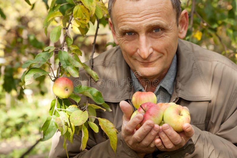 Vieil homme avec des pommes dans des mains dans le verger photo libre de droits