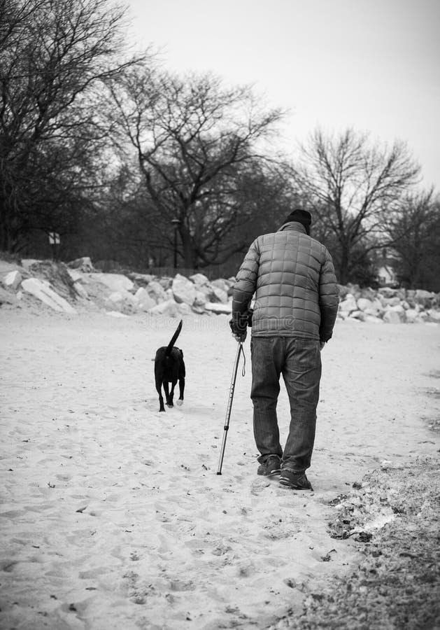 Vieil homme marchant avec son chien sur une plage image stock