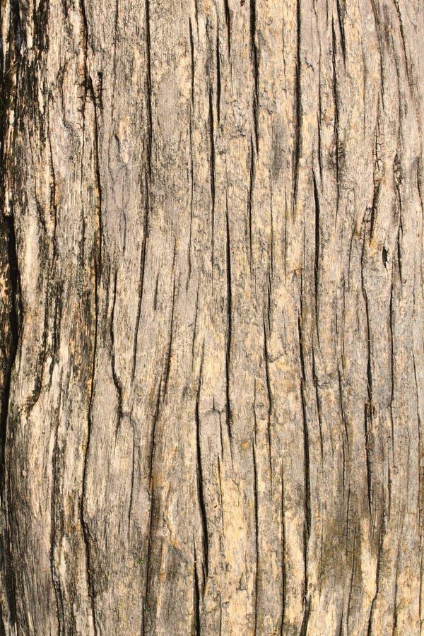 Vieille écorce d'arbre photo stock