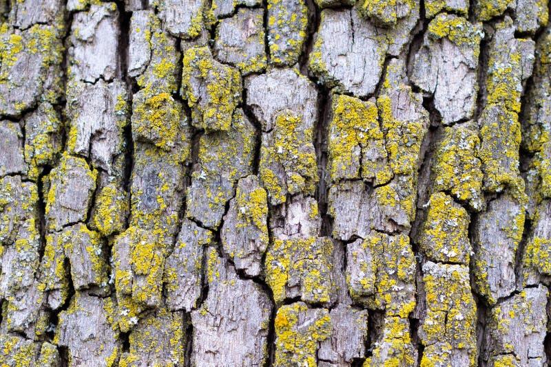 Vieille écorce d'arbre avec de la mousse image libre de droits