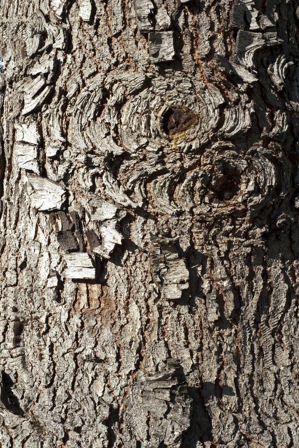 Vieille écorce d'arbre de sapin rouge photo stock