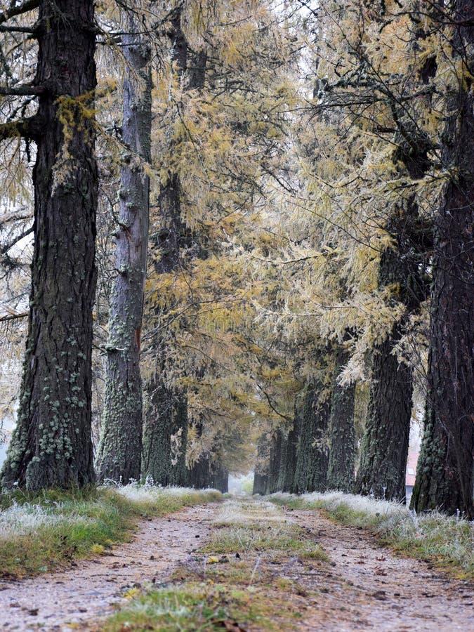 Vieille allée d'arbres, une route de campagne simple images libres de droits