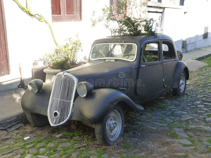Vieille automobile avec l'usine de wilde dans Colonia De Sacramento image stock