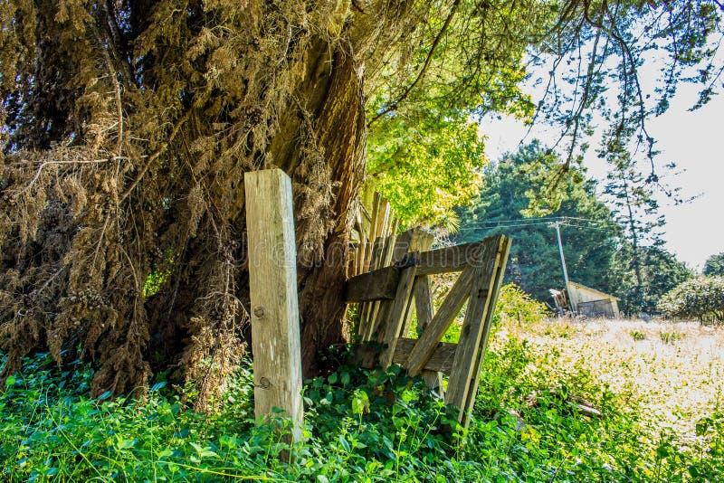 Vieille barrière de ferme à côté d'un arbre massif étant au-dessus de développé avec des arbustes photographie stock