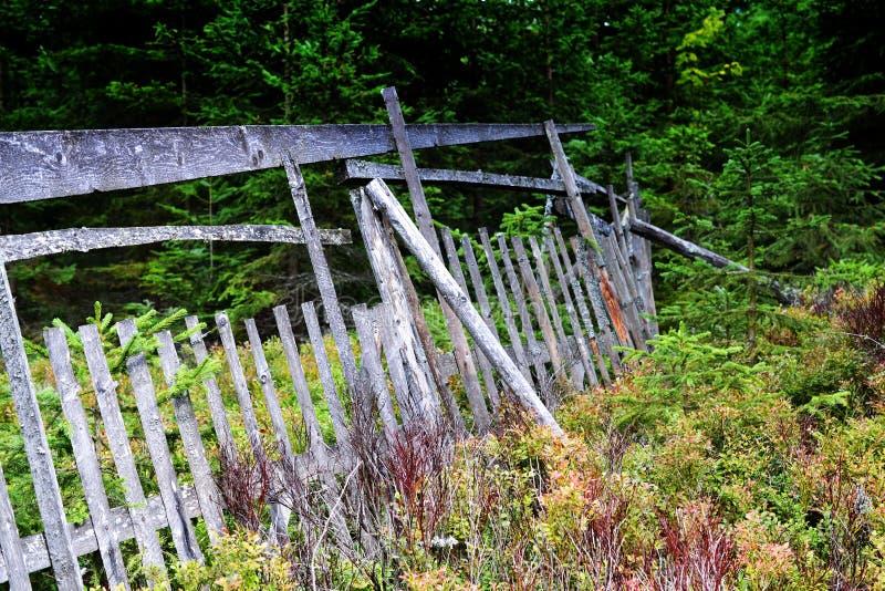 Vieille barrière en bois dans la forêt photos libres de droits