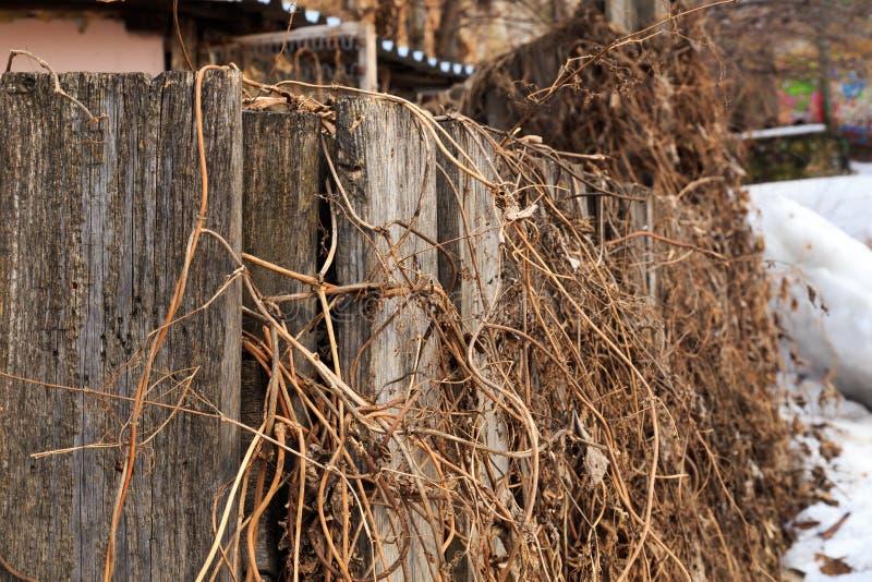 Vieille barrière en bois enlacée avec l'herbe sèche de l'année dernière photo libre de droits