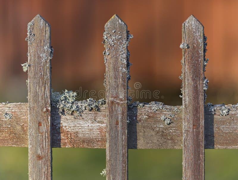 Vieille barrière en bois superficielle par les agents avec de la mousse image stock