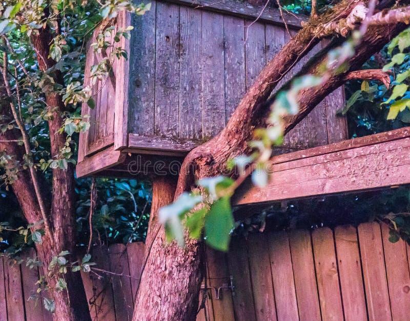Vieille cabane dans un arbre contre la barrière en bois dans la lumière de coucher du soleil : Plan rapproché photo stock