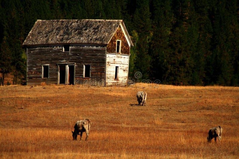 Vieille Chambre de ranch 2 photographie stock