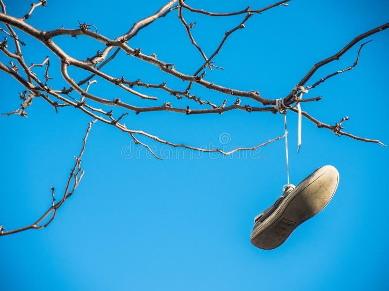Vieille chaussure accrochant sur l'arbre d'isolement sur le fond de ciel bleu à Sydney, Australie image stock