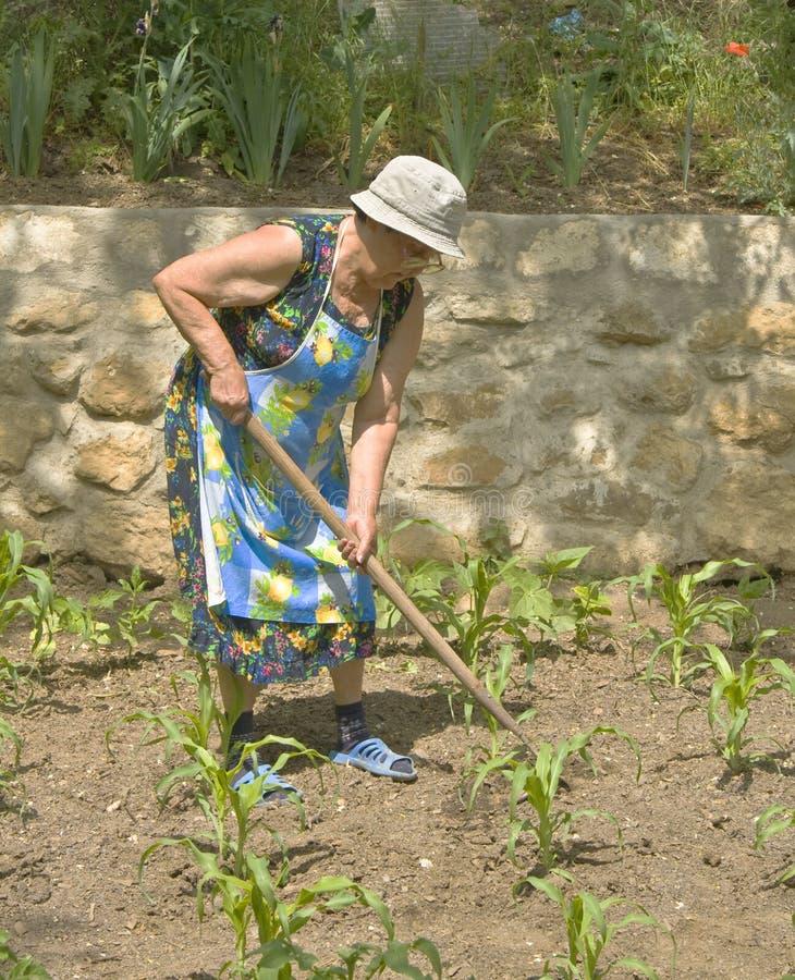 Vieille dame travaillant dans le jardin images stock