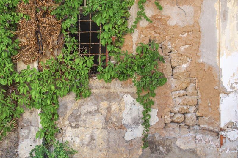 Vieille fenêtre de lierre à la maison jaune abandonnée de ciment de bloc photos libres de droits