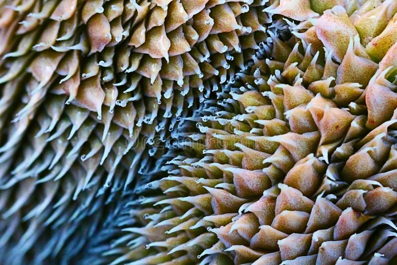 Vieille fleur de roche images stock