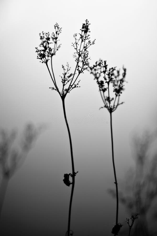 Vieille fleur sèche en brouillard photo stock