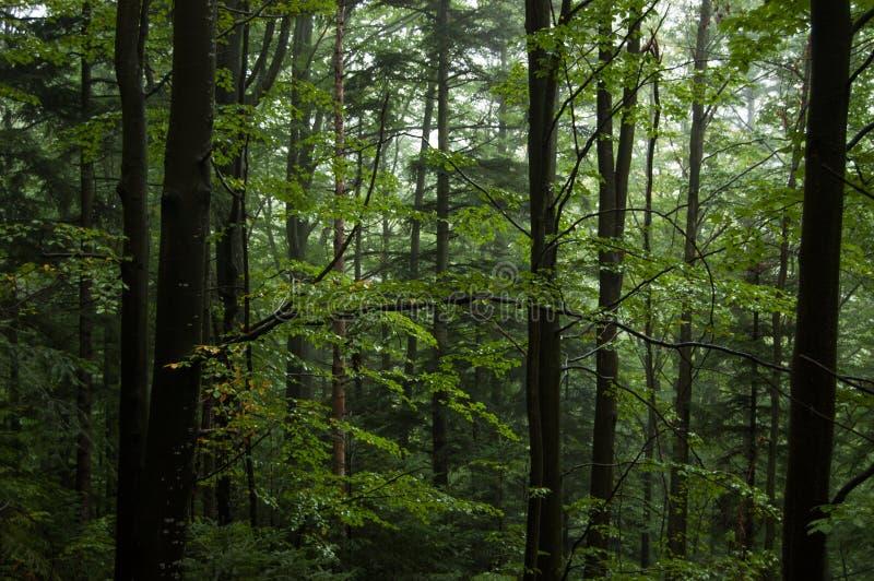 Vieille forêt photographie stock libre de droits
