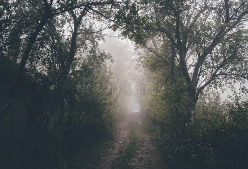 Vieille forêt de cuvette de route images libres de droits