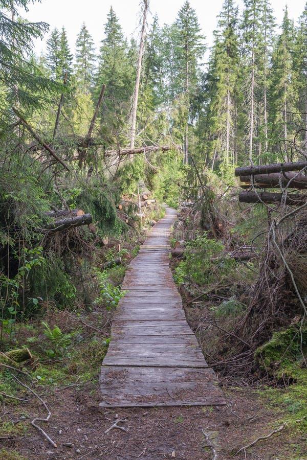 Vieille forêt de rezervation de forêt images libres de droits