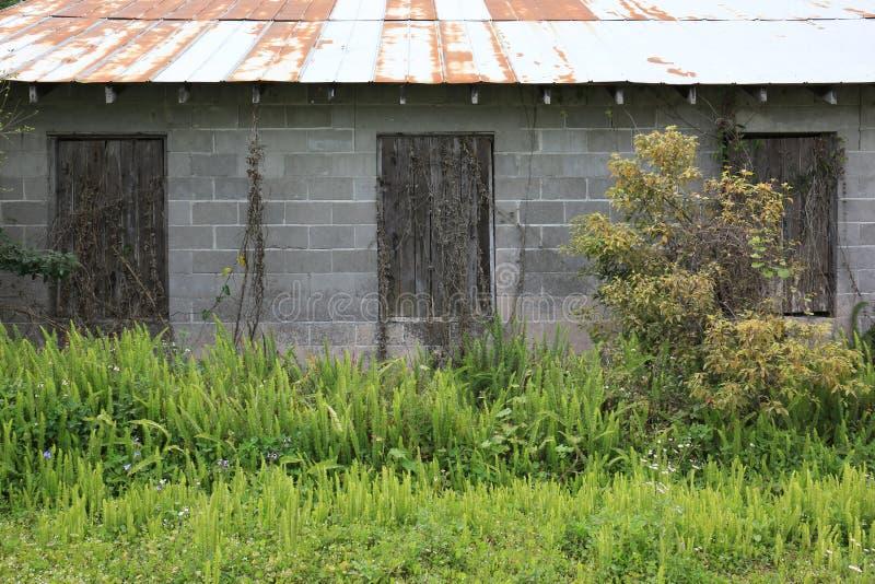 Vieille grange de bloc de ciment avec Windows embarqué, Tin Roof et des fougères photos stock