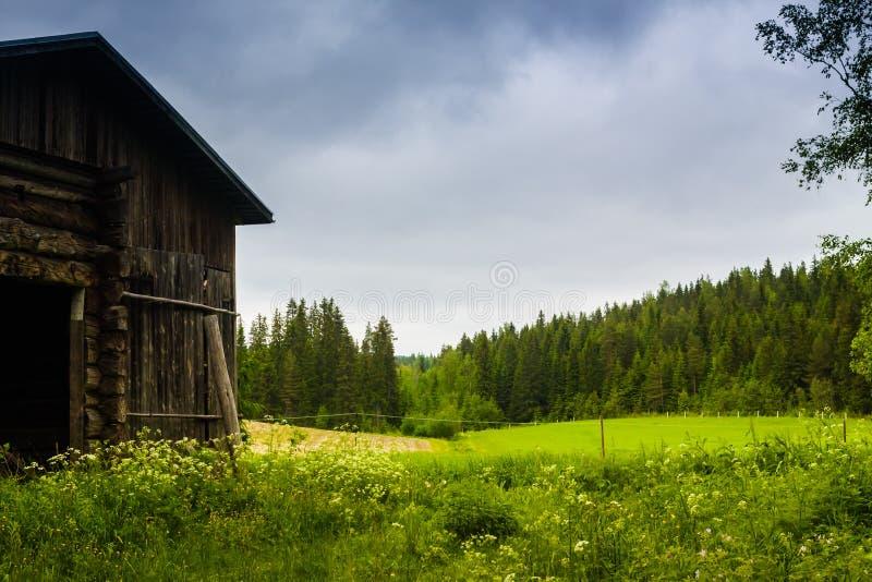 Vieille grange et les champs d'été photo libre de droits