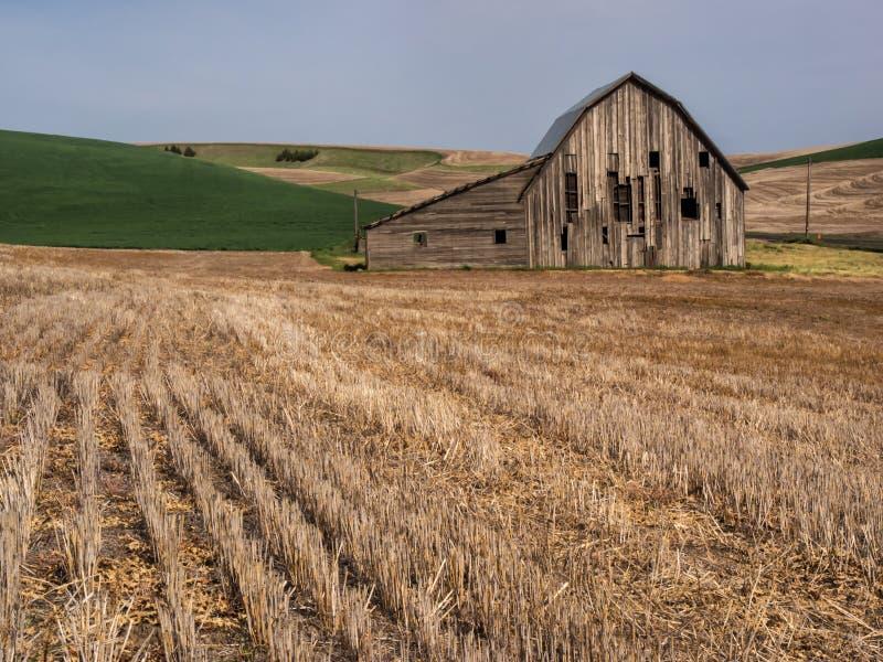 Vieille grange superficielle par les agents entourée par des champs de blé images libres de droits