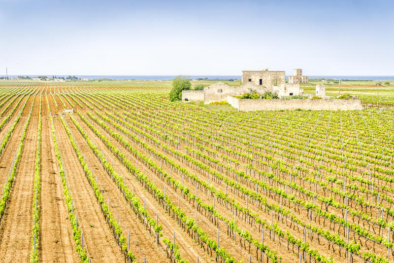 Vieille maison abandonnée d'établissement vinicole dans le vignoble, Italie image libre de droits