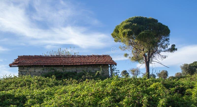 Vieille maison couverte par des buissons photographie stock libre de droits