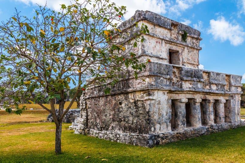 Vieille maison maya antique ruinée avec l'arbre dans l'avant, Tulum, Yu image libre de droits